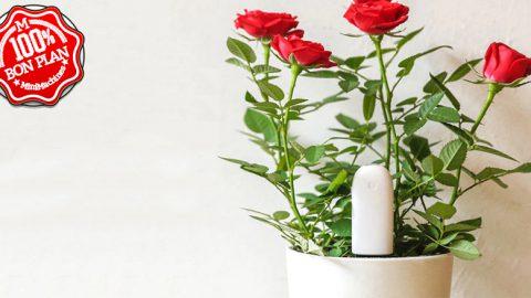Analyseur de sol pour plantes Xiaomi